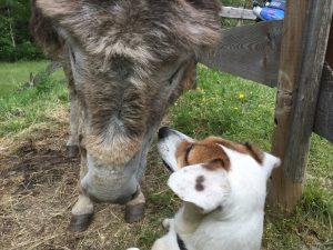 Hunde freund 1