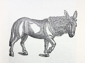 Gesners Esel