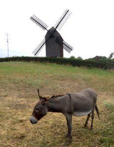 Berliner Esel