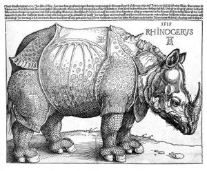 Dürrers Rhino