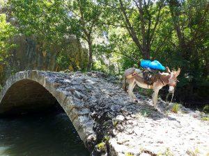 Foto: Astrid Mechau, Eselin Camilla auf Brücke.