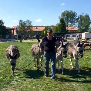 Vier Esel