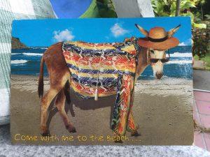 Eselpostkarte Bulgarien vorn
